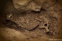 cave bear 3